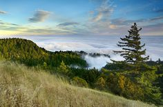 Mt. Tam redwoods and fog, Patrick Smith