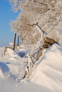Winter Wire