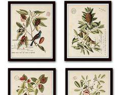 Audubon Bird Prints French Aviary Collage Print Set No. 3