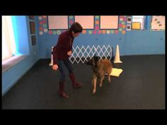 """How to #Teach Your #Dog the """"Go to Place"""" #Command"""