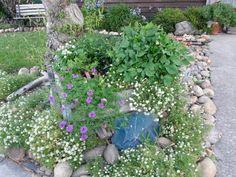 Various flowers planted in wine barrel