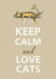 Keep calm and love cats - this my new motto - who would have ever guessed I would become a crazy cat lady? Crazy Cat Lady, Crazy Cats, I Love Cats, Cool Cats, Gatos Cats, Photo Chat, Cat Quotes, Puppy Quotes, Good Quotes