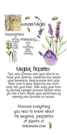 Plant Magic, Magic Herbs, Herbal Magic, Herbal Witch, Witch Herbs, Witchcraft Herbs, Green Witchcraft, Lavender Uses, Wiccan Magic