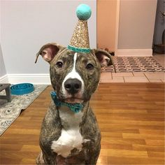 Dog Birthday Party Cone Hat and Bow tie Dog First Birthday, Puppy Birthday, Animal Birthday, Dog Cone, Birthday Party Hats, Birthday Ideas, Dog Winter Coat, Puppy Party, Dog Costumes