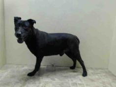 SAFE --- SUPER URGENT 5/16/14  Brooklyn Center   BO - A1000058   MALE, BLACK, LABRADOR RETR / AKITA, 12 yrs  OWNER SUR - EVALUATE, NO HOLD Reason OWNER SICK   Intake condition NONE Intake Date 05/16/2014, From NY 11221, DueOut Date 05/16/2014  https://www.facebook.com/photo.php?fbid=806001716079376&set=pb.152876678058553.-2207520000.1400460498.&type=3&theater
