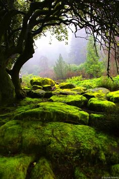 Lush green forest haven
