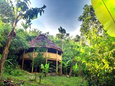 the Ayahuasca offers a relaxed and also tranquil atmosphere, comforting a person and also oozing the stress right of them