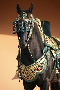 Berber horse. Morocco