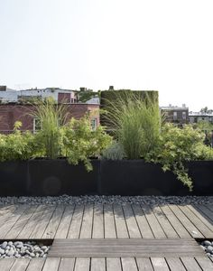 Brooklyn roof garden Julie Farris by Matthew Williams