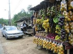 stopping at the side of the road to pick up some fruits in Jamaica