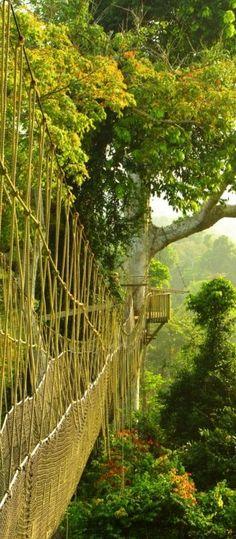 Ghana national park!
