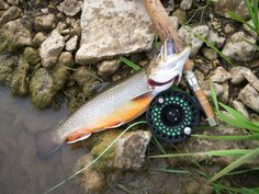 Great tips on how to fish for trout.  #Iowa #fishing