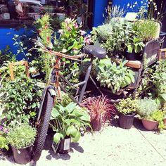 MT @emjacobi: Bicycle garden #sustyd2d