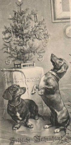 Vintage German Dachshund Christmas postcard via pinterest.com