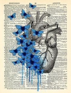 Heart Human Anatomy Butterfly Anatomical Heart by PrintsVariete