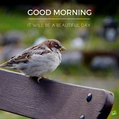 Good Morning Card with image of a little bird