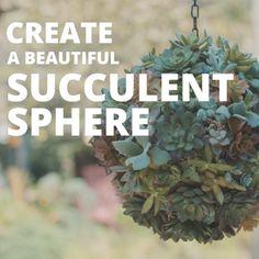 DIY Living Succulent Sphere