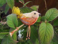 Pták Jarabák