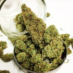 Super Silver Haze, bred by Green House Seeds, won the High Times Harvest Festival!! All day today, you can get 5g for 55 donation!! The uplifting effects are a great remedy for high stress, lack of appetite, and nausea🌳#sandiego #stonernation #ganja #pot #buddha #fire #topshelf #super #silver #haze #supersilverhaze #pot #weed #tree #greens #nugs #bud #dank #sogood #comengetit #greens #gogreen #dispensary #collective #goldcoast #weedstagram #instabud #cannabis #medicine #medicated #smokeweed