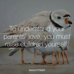 What I Need, Understanding Yourself, My Children, Owl, Bird, Animals, Inspirational, Quotes, Image
