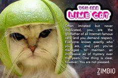 I took Zimbio's Internet cat quiz and I'm Limecat! Who are you? #ZimbioQuiz  null - Quiz