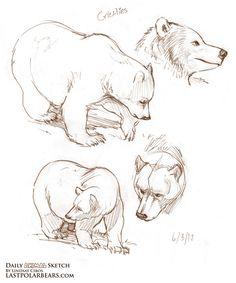 Daily Animal Sketch – Grizzlies and Polar Bears Animal Sketches, Animal Drawings, Art Sketches, Art Drawings, Polar Bear Drawing, Fox Drawing, Bear Sketch, Bear Illustration, Bear Art