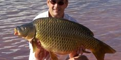 Carp Fishing Tips, Tricks and Techniques