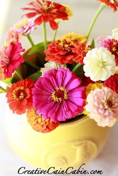 If I had to choose a favorite, it would probably be zinnias. I love them.