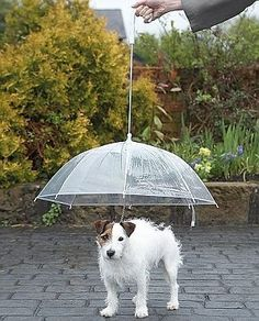 Doggy Brolly - No more soggy doggy with this umbrella for your pooch - with built in leadOnline and instore - price slashed from to and now Baby Raincoat, Yellow Raincoat, Dog Umbrella, North Face Rain Jacket, Cool Inventions, Raincoats For Women, Getting Wet, Doge, Mans Best Friend
