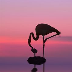 flamingo and baby.