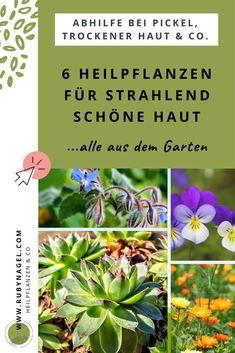 Im Artikel zeig ich dir, welche 6 Heilpflanzen, die du vielleicht auch shcon im Garten hast, du bei Hautproblemen wie Pickel, Akne, trockener oder fettiger Haut, Ausschlägen & Co. verwenden kannst. Du hast keinen Garten? Sie wachsen auch auf dem Balkon :-) #rubynagel #heilpflanzenfürdiehaut #hautpflege #pickel #akne #naturkosmetik Sempervivum, Skin Problems, Remedies, Plants, Evening Primrose, Herbal Medicine, Natural Medicine, Pimple, Medicinal Plants