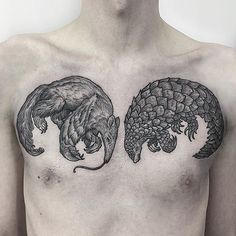 Giant Anteater and Pangolin mirrored chest piece. Sam's first tattoo. Well sat dude! #tattoo #etching #gothic #fineline #blackwork #blackworkerssubmission #btattooing #dotwork #chesttattoo #animals #anteater #pangolin