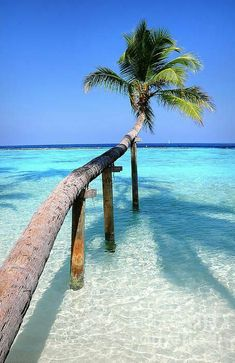 Tropical Palm over Lagoon by Jenny Rainbow. Maldives ..... #Relax more with healing sounds: