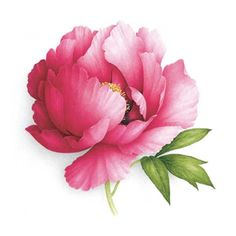 watercolor peony paintings | Painting, 50 x 50 cm ©2012 par Vincent Jeannerot - Peinture ...