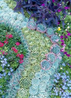Magnifique jaedin de plantes grasses : quel magnjfjque mélange de couleur. (10 plantes pour les cours mi-ombragées - Coup de Pouce)