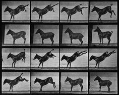 Animal Locomotion: Plate 658 (Mule) . Eadweard Muybridge