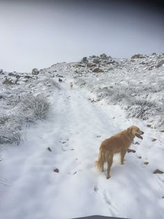 Ceres/ Matroosberg Nature reserve Nature Reserve, South Africa, Westerns, Snow, Cape, Travel, Outdoor, Mantle, Outdoors