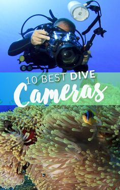 The greatest underwater photography tips start with finding the right camera. So whichever kind of underwater photography you are into, here are the 10 best underwater cameras for scuba diving. Scuba Diving Camera, Best Scuba Diving, Scuba Diving Gear, Cave Diving, Best Underwater Camera, Underwater Photos, Underwater Photography, Ocean Underwater, Still Photography