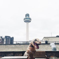 REX is back in the office! He's enjoying the views whilst we work away!
