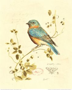 Gilded Songbird IV Print by Chad Barrett (Drawing inspiration from a century botanical plate) canvas painting abstract, photo canvas ideas, dream canvas Images Vintage, Art Vintage, Vintage Birds, Poster Vintage, Vintage Bird Tattoo, Bluebird Vintage, Vintage Pictures, Vintage Floral, Bird Prints