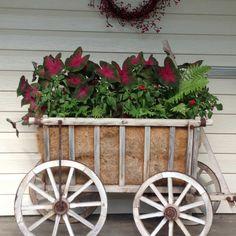 My goat wagon in July.
