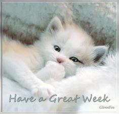 have a great week....sweetest kitty