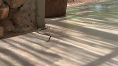 YouTube Vine Snake, All Inclusive Resorts, Vines, Safari, Africa, Camping, Explore, Youtube, Photography