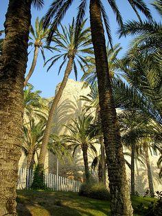 Parque Municipal de Elche http://www.alicanteholidayvillas.com/elche