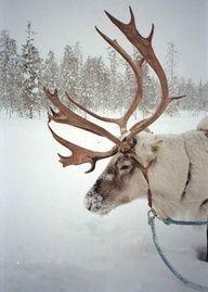 Where's Rudolph?  3 repins  tinywhitedaisies.tumblr.com
