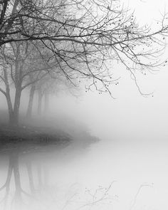 black and white photography, trees, fog, landscape, nature, WINTER TREE REFLECTIONS_ 8 x 10 print