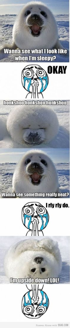The Cutest Baby Seal EVER.