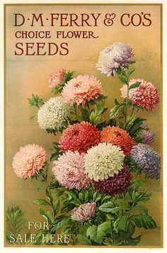 DP Vintage Posters - Original American D M Ferry and Co Seeds