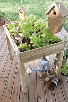 This domain was registered by Youdot. Balcony Garden, Herb Garden, Vegetable Garden, Garden Tools, Love Garden, Container Plants, Planters, Backyard, Bird