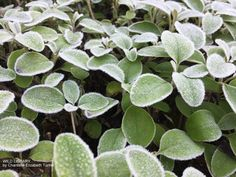 Winter memories   Wild Library blog Frozen leaves. Ireland. County Donegal. Short stories